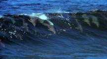 Aerial Dolphins Ride Waves, Slow Motion
