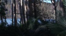 Pan/Fast Pan In Gum Forest With Burrawang Palms And Lake Behind