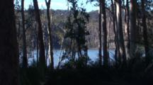 Gum Forest With Burrawang Palms And Lake Behind