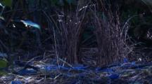 Flickering Sun Reaches A Bowerbird's Bower On The Forest Floor