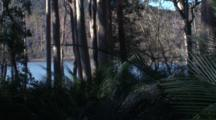 Right Pan/Fast Pan In A Coastal Forest With Burrawang Palms