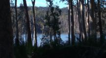 Coastal Forest With Growth Of Burrawang Palms And Lake Behind