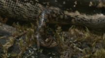 A Lizard Takes A Break On A Mossy Fallen Tree