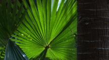 A Backlit Palm Frond Weeps Gently In The Wind