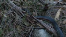 A Black Snake Glides Through A Dry Creek Bed