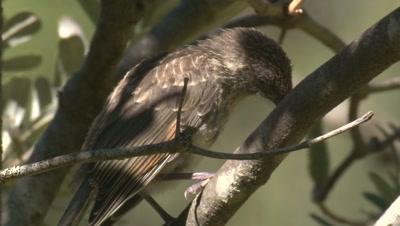 A bird perches among foliage in a bush