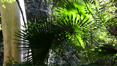 Pan of palm fronds in a rainforest pocket