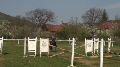 Hutsul pony show jumping training in Aggtelek National Park Equus caballus caballus hutsul