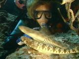 Lizardfish With Diver