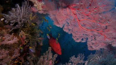 Ultra HD Underwater Coral Reef