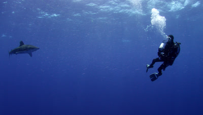 Ultra HD Underwater Sharks