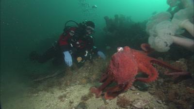 Scuba Diving Stock Footage