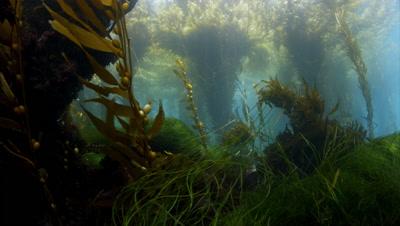 Channel Islands Stock Footage