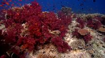 Swimover Across Beautiful And Diverse Hard And Soft Corals With Lots Of Reef Fish.
