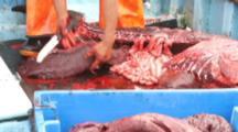 Dolphin Meat For Shark Bait