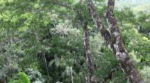 View Of The Forest Canopy In The Amazon