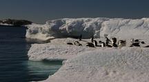 Adelie Penguins Rest On Ice Edge