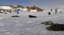Tourists Observe Weddell Seals Near Mawsons Hut, Antarctica