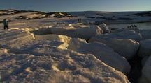 People Among Adelie Penguins And Weddell Seals On Antarctica Ice At Sunset