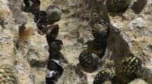 Underwater Shot Of Nerite Snales, Mussels & Chiton In A Shallow Tidepool, Shot Zooms Out