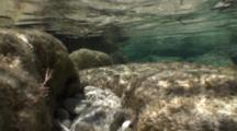 A Large Active Tidepool With Wave Action, Wave Ripples On Bottom, Nice Light