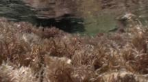 A Large Active Tidepool With Wave Action, Wave Ripples & Moss On Bottom, Nice Light
