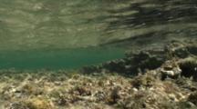 Bottom Of A Tidepool, Wave Ripples & Moss On Bottom, Nice Light