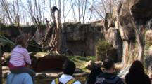 Chimpanzees (Pan Troglodytes Troglodytes) In A Natural Looking Enclosure Are Viewed By Zoo Guests