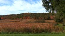 Maine Scenic In Fall Colors - Shot Pans Along River Bank With Reeds