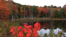 Maine Scenic In Fall Colors - Shot Pans Accross A Black-Water Pond