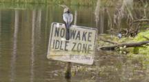 An Anhinga (Anhinga Anhinga) Rests On A Navigational Sign As Camera Moves By, Tri-Colored Heron In Background