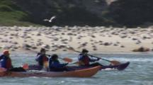 Kayakers Paddle Past A Beach Filled With Gulls And Dunes Covered By Vegitation, Shot Pans With Action And Stops On Harbor Seals On Beach
