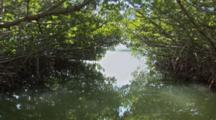A Pov Shot Traveling Through A Water Way Lined With Mangroves Whos Canopy Creates A Tunnel Like Effect