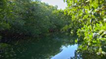 A Pov Shot Traveling Through A Water Way Lined With Mangroves