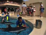 Japan - Trainer & Pacific White-sided Dolphins At Marine Park, Kids In Background