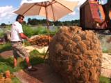 Tarpon Springs Florida - Sponge Fisherman Untieing & Sorting Giant Ball Of Sponge.