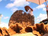 Tarpon Springs Florida - Sponge Fisherman Sorting Bag Of Sponges, Low Angle