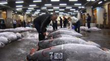 Tsukiji Fish Market, Tokyo - Low Angle, Handheld Shot Of Frozen Tuna Being Labled & Inspected By Buyers