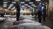Tsukiji Fish Market, Tokyo - Low Angle, Handheld Shot Of Frozen Tuna For Sale On Auction Floor