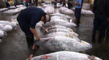 Tsukiji Fish Market, Tokyo - Handheld Shot Of Frozen Tuna For Sale On Auction Floor
