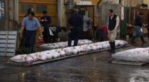 Tsukiji Fish Market, Tokyo - Handheld Wide Shot Of Several Rows Of Tuna Prior To Auction