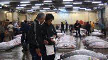 Tsukiji Fish Market, Tokyo - Handheld Wide Shot Of Tuna Prior To Auction