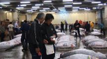 Tsukiji Fish Market, Tokyo - Handheld Wide Shot Of Tuna Prior To Auction