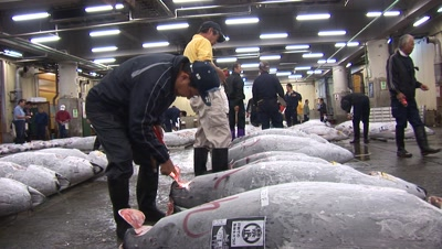 Tsukiji Fish Market Stock Footage