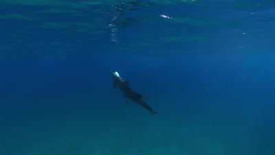 Edited content - Dolphins