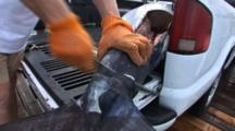 Fishing - Tail Of Marlin Beginning To Be Removed