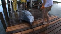 Fishing - Marlin On A Dock, People Approach