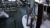 Fishing - Marlin Hangs On Crane With People In Frame, Shot Tilts Up