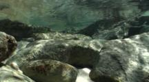 Tropical Tide Pool, Nice Light, Wave Rolls Over Surface And Sergeant Major Fish Abound