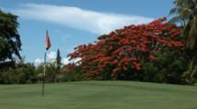 Colorful Flowers On A Royal Poinciana Tree On A Bahamas Golf Course
